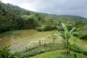 5 Things You'll Love About Bali Eco Stay