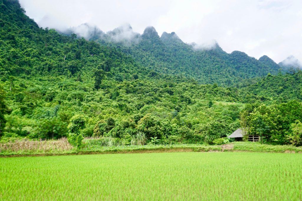 Green Everything Ha Giang
