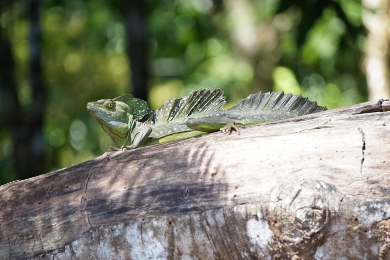 20 Postcard-Worthy Pictures of Wildlife at Tortuguero National Park