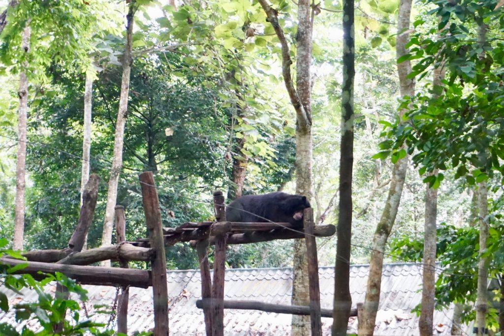 moon bear nap